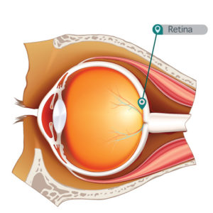 esquema_ojo_retina