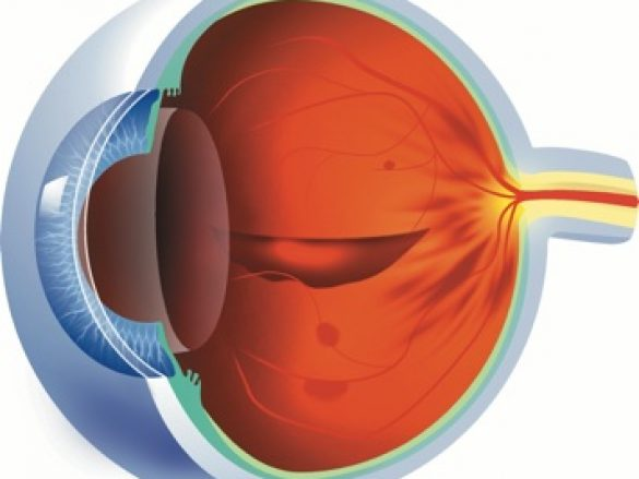 La importancia de la retina
