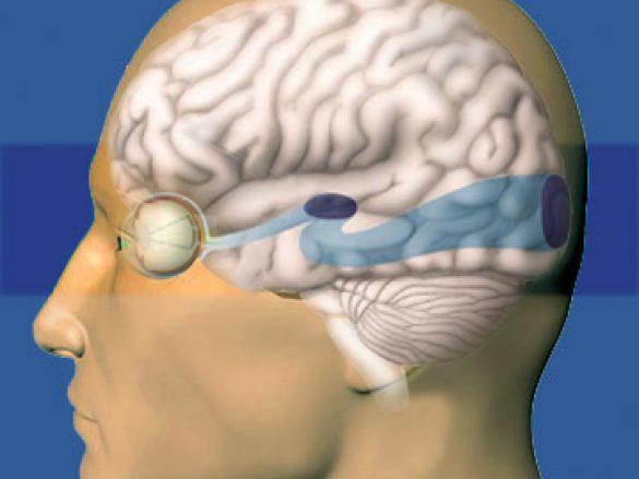¿Cómo se conecta el ojo con el cerebro?